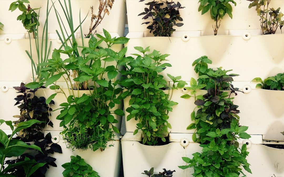 How to Grow a Mini Farm in Your HDB Flat